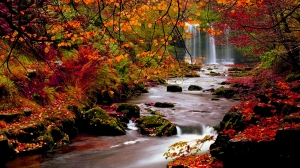 hd_wallpapers_nature_fall67